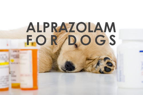 Can You Give Alprazolam For Dogs?